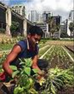 turning urban wasteland into food