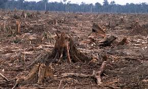 Deforestation - WWF