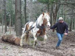 horselogging