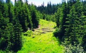 Foresting to allow Regrowth -naturallywood.com