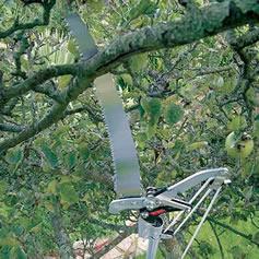 pole-pruning-saw