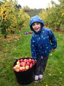 Apple gleaning