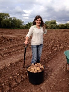 Gleaning spuds