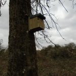 Birdbox stables