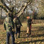 Pruning Birchfiled 2